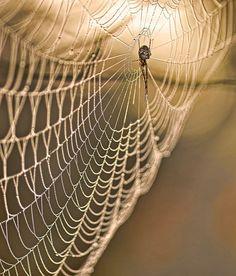 Araignée tisseuse : 25 portraits originaux d'insectes - Linternaute