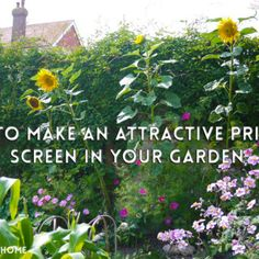 How to make an attractive privacy screen in your garden