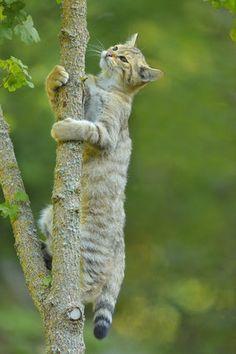 猫たちは、木のぼりが大好き【画像】