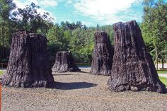 Fossil Trees, Ipolytarnóc, Hungary - bükkábrányi ősfák vagy bükki ősfák az a… Heaven On Earth, Science And Nature, Naha, Homeland, Geology, Places To See, National Parks, Landscape, World
