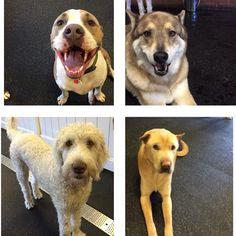 #fitdogs are #happydogs!❤️ #fitdogsportsclub