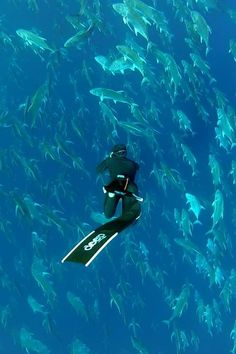 #Scuba it's amazing down there!