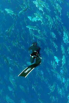 #diver #fish #shoal