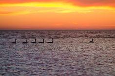 leader - Chudskoy Lake (Lake Peipsi) Celestial, Sunset, Outdoor, Sunsets, Outdoors, Outdoor Living, Garden