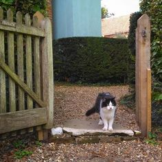 Gunby cat Craig is personally welcoming visitors into his gardens today #gunbyhall #nationaltrust #ntmidlands #garden #gardens #cat #catsofinstagram #instacat #catagram #norwegianforestcat #diabeticcat #lincolnshire #england #britain