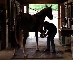 Bruised soles occur frequently for #horses, but with careful #maintenance and a bit of forethought, they are easy to prevent. Find out more in today's blog!