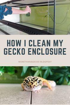 Cleaning my reptile enclosure Reptile Habitat, Reptile Cage, Reptile Enclosure, Leopard Gecko Habitat, Leopard Gecko Care, Tree Frog Terrarium, Gecko Terrarium, Crested Gecko Care, Lepord Gecko