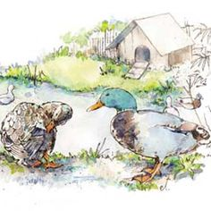 Ducks and geese are low-maintenance birds that provide fresh eggs, homegrown meat, pest and weed control, and even poultry manure for your garden. Learn more in this article from MOTHER EARTH NEWS magazine.