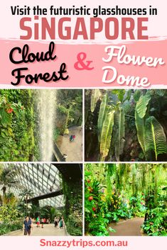 The Enchanting Cloud Forest Dome And Flower Dome In Singapore are not to be missed when you visit Gardens By The Bay #cloudforestflowerdome #singaporearchitecture #singaporetravelblog #cloudforestwaterfall #indoorwaterfall #indoormountain #indoorcloudforest #flowerdomesingapore #snazzytrips Travel Around The World, Around The Worlds, Indoor Waterfall, Forest Flowers, Cruise Excursions, Australian Garden, Singapore Travel, Gardens By The Bay, New Years Decorations