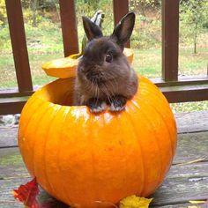 Just my rabbit in a pumpkin. Happy fall! - Imgur