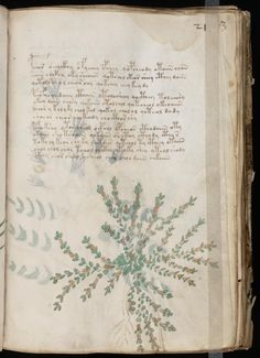THE BOOK THAT CANNOT BE READ VOYNICH MANUSCRIPT