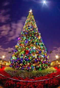 The Epcot Christmas tree in Orlando, Florida