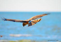 Galveston's avian beach patrol. Galveston Island, Birds, Beach, Photography, Animals, Collection, Photograph, Animales, The Beach