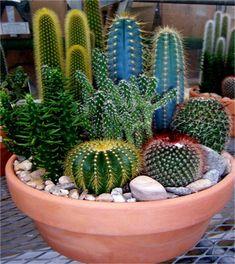 Cactus y suculentas de América