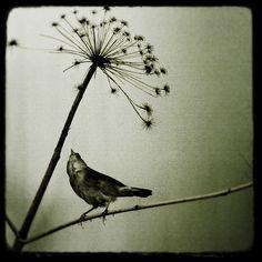bird and queen ann lace flower