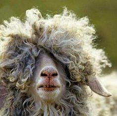 Give this boy a Haircut .......I need some more yarn...:)The Yarn Company
