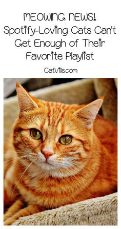 These Spotify-loving cats can't get enough of their favorite songs! Find out what they're listening to and make your own cat-friendly playlist!