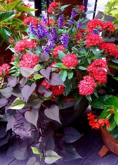 Colorful container garden.