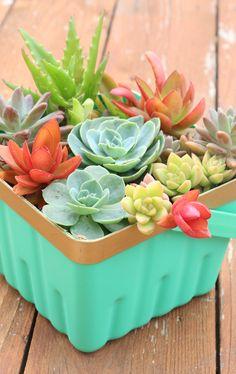 Succulents add a pop of color and life to your home decor! Now you can recycle your own berry basket into a mini succulent garden!