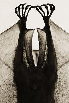 Flying fox, Pteropus mearnsi, by Henry Horenstein