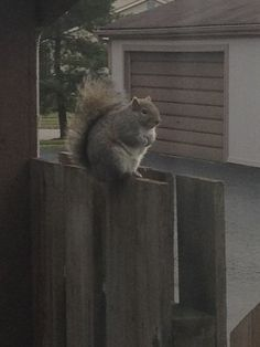 Fat Squirrels Fat Squirrel And Squirrel - Cat squirrel playing cutest thing youll see day