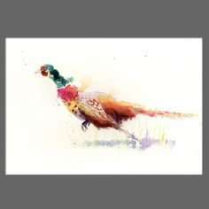 JEN BUCKLEY Original runnning PHEASANT  Watercolour PAINTING signed large A3