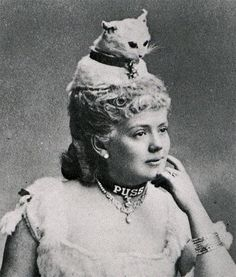 Taxidermy cat hat...wrong, just wrong!