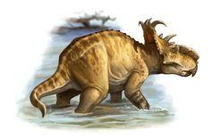 Pachyrhinosaurus by Raul A. Ramos