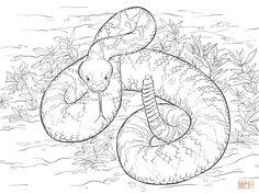 Western Diamondback Rattlesnake Coloring Pages Free - Coloring For Kids 2019 Free Printable Coloring Pages, Free Coloring Pages, Coloring Sheets, Coloring Books, Adult Coloring, Snake Drawing, Snake Art, Cool Stuff, Rattlesnake Tattoo