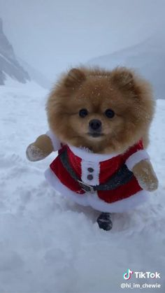 Cute Animal Memes, Funny Animal Videos, Cute Funny Animals, Cute Baby Animals, Funny Cute, Dog Christmas Clothes, Christmas Puppy, Christmas Animals, Dog Christmas Outfits