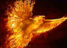 What is really behind the story of Phoenix, the bird of immortality, the bird that rises from the ashes? The Phoenix is known in various forms and by various names throughout the Middle and Far East, the Mediterranean, and Europe. Mythological Creatures, Mythical Creatures, Mythical Birds, Rising Phoenix Tattoo, Phoenix Tattoos, Dove Tattoos, Tatoos, Dragons, Phoenix Images