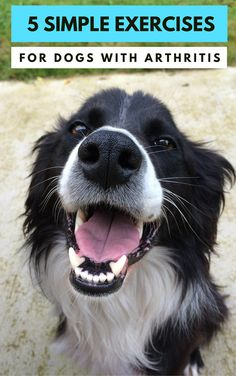 5 Simple Exercises for Dogs With Arthritis