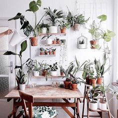 """House Plant Club (@houseplantclub)  """"We could work at this desk all day long! : @wild.rocks thanks so much for sharing with…"""""""