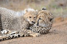 A tender moment Photo by Andrew Coleman -- National Geographic Your Shot