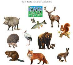 Modal – Prehrať – Materiál | Tuul Rooster, Preschool, Learning, Movie Posters, Art, Kindergarten, Trier, Carnavals, Art Background