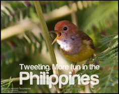 For the best birding experience anywhere in the Philippines. Come and join us birdwatching and get the chance to see the Great Philippine Eagle and many other endemic wild birds. Philippines Tourism, Philippines Culture, Philippine Eagle, Tourism Department, Visayas, Mindanao, Bird Species, Wild Birds, Pinoy
