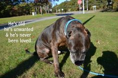 He's old and unwanted: At the shelter his eyes know he won't be chosen