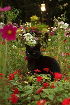 Summer flowers and a black cat - reminds me of my darlilng Bosco who loved to…