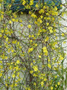 Winter! - oder Frühling? - oder doch Sommer? | Dragonflys Gartenblog