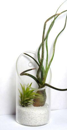 cute air plant arrangement