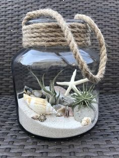 Luft Pflanzen DIY Ideen In Best Plants DIY Ideas And Inspiration For You The post Beste 70 + Air Plants DIY Ideen und Inspiration für Sie appeared first on Home Dekoration. Seashell Crafts, Beach Crafts, Diy And Crafts, Seashell Projects, Beach Themed Crafts, Driftwood Crafts, Seashell Art, Mason Jar Crafts, Bottle Crafts