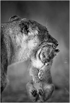 Mama loves you…