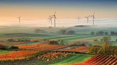 Windmills stand tall in the vineyards of Burgenland in Edelstal, Austria. Photo by Matej Ková. Solar Powered Garden Lights, What Is Green, Harmony Of The Seas, Solar Energy System, Renewable Energy, Science And Nature, The World's Greatest, Wine Country, How To Take Photos