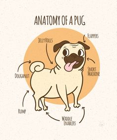 Pug Anatomy. I've been seeing these around and wanted to doodle some like these at work. Cute, no?!