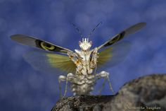 Personal favourites of Macro wold group IV Praying Mantis, Moth, Insects, Wings, Animals, Group, Gallery, Animales, Animaux