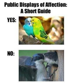 PDA Guide For Those Who Don't Get It  // funny pictures - funny photos - funny images - funny pics - funny quotes - #lol #humor #funnypictures