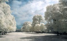Best Things - 16 Mind-Bending Photos Taken in Infrared 4