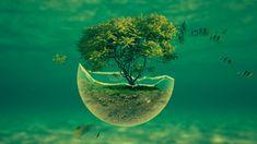 Tree Abstract Underwater Wallpaper For Desktop Tree Desktop Wallpaper, Desktop Background Images, Cool Desktop, Calendar Wallpaper, Animal Wallpaper, Computer Wallpaper, New Wallpaper, Wallpaper Downloads, Nature Wallpaper