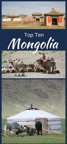 If you are an adventurous traveler and looking for something totally different, Mongolia is the place for you. It's great for families, too - don't worry!  Click through to find out all the awesome things we did and recommend you do when you go.  ~ReflectionsEnroute