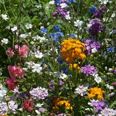 Country Magic Partial Shade Wildflower Mix is designed for areas that are partially shaded. This mixture has 55% annuals and 45% perennials and biennials.